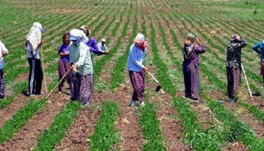 Tarımda İstihdam Arttı