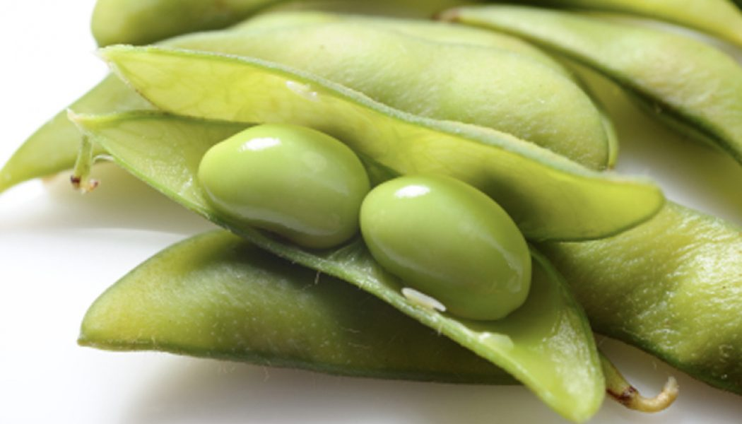 Biyogüvenlik Kurulu genetiği değiştirilmiş dört soya ve mısır çeşidinin hayvan yemlerinde kullanılmasına izin verdi-RG